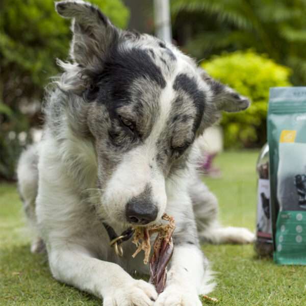 SuperCan Dog Chewing on beef jerky stick